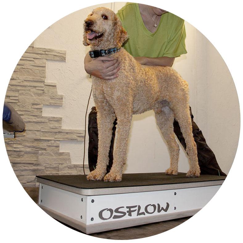 Hunde OSFLOW Bild in der Therapieanwendung